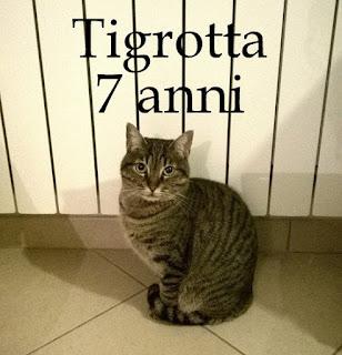 tigrotta