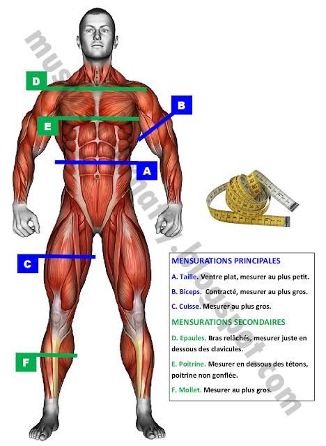 logo manuel de musculation à domicile: méthode poids du corps et haltère, prendre ses mensutions musculation fitness