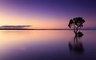 Mare al tramonto con alberi