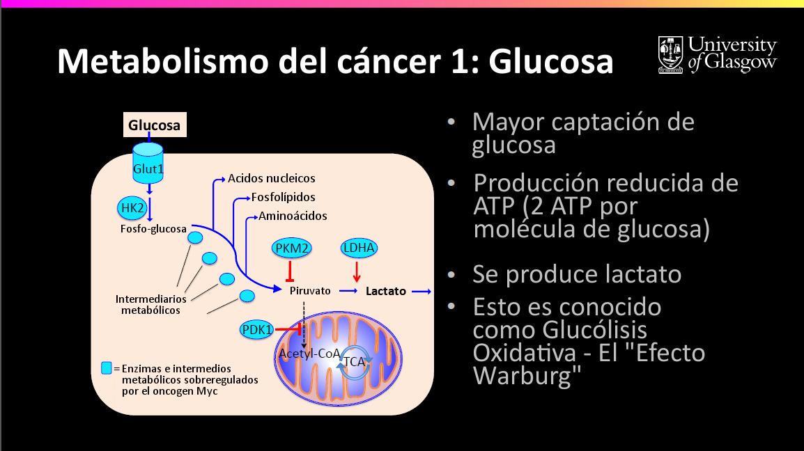 diabetes tipo 1 metabolismo de aminoácidos y cáncer
