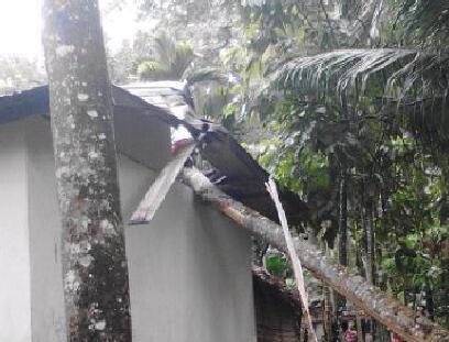 Angin Kencang, Rumah Warga di Abdya Ditimpa Pohon