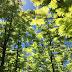 Lost Man Creek,  es una instalación que reproduce un bosque de sequoias como si fuera una maqueta