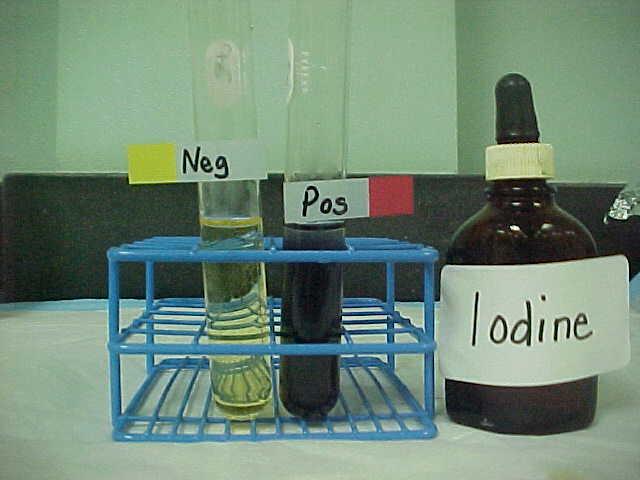 Macromolecules lab bio 1 lab