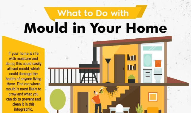 What To Do With Mould in the Home