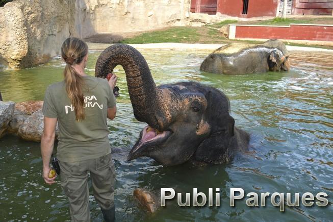Alimentacion elefantas
