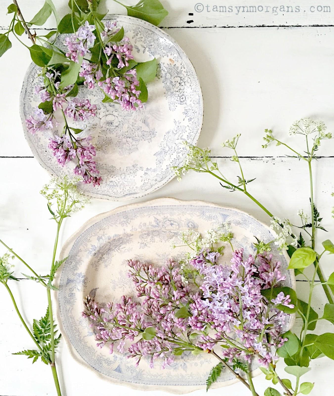 Lilac and China
