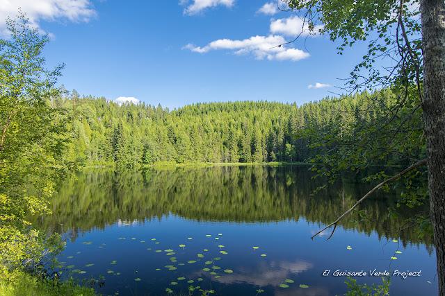 Bjordammen, Nordmarka - Oslo por El Guisante Verde Project