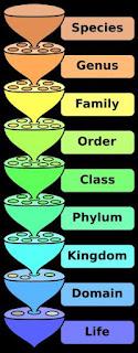 CBSE Class – XI - Biology - NCERT Chapter 1 - The Living World (NCERT Chapter Solutions)