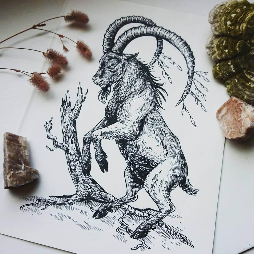 09-Mountain-Goat-Weronika-Kolinska-Black-and-White-Animal-Ink-Drawings-www-designstack-co