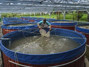 Memanfaatkan Plastik Uv Untuk Budidaya Ikan Yang Lebih Menguntungkan