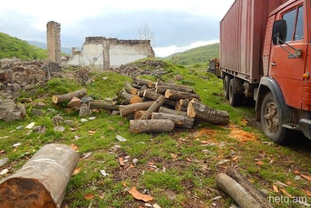 Armenia prohíbe exportar madera ante talas ilegales