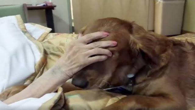 Συγκινητικό: Σκύλος αποχαιρετάει την ετοιμοθάνατη αφεντικίνα του (βίντεο)