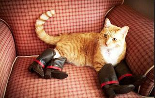 靴が大好きな可愛い猫8