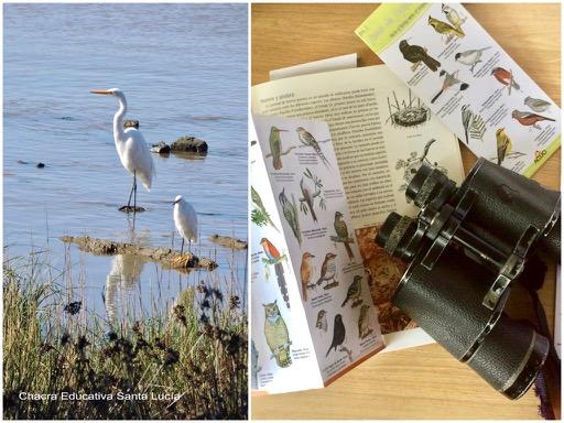 Grazas en el puerto del Buceo / Guías de aves y binoculares - Chacra Educativa Santa Lucía