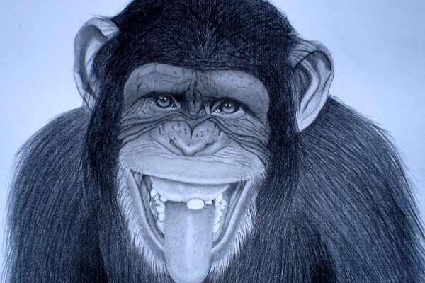 funny monkey drawing
