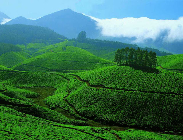 Hotels in Munnar Town