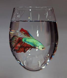 percepción-cuadros-con-animales pinturas-realistas-animales