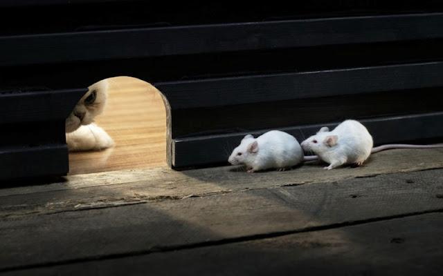 3 Cara Ampuh Mengusir Tikus dari Rumah