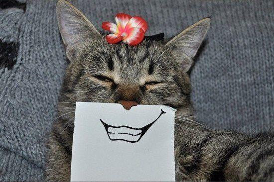 Все о братьях наших меньших: Когда скучно, но есть кот