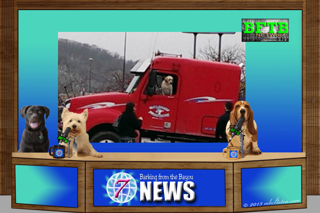 Dog news desk with dog driving semi truck background