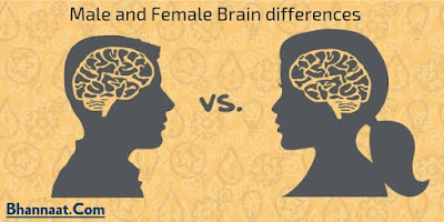 Difference Between Male and Female Brain
