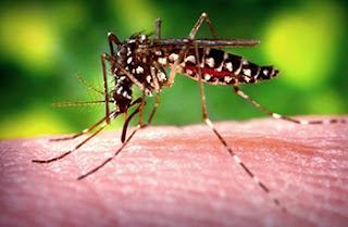 Zika: An International Emergency?