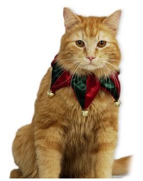 Animales vestidos de navidad