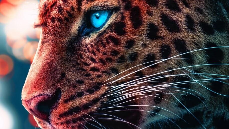 Cheetah, Eyes, 4K, #6.450