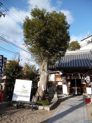淀川神社ご神木