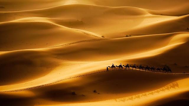 The Sahara Desert @National Geographic