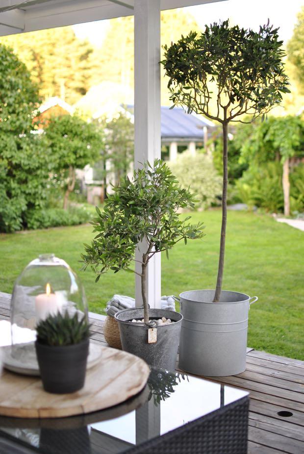 olivträd zinkhink altan trädgård hannashantverk.blogspot.se