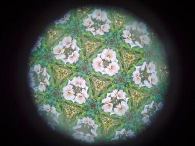 kaleidoscope white flowers