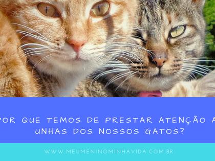 Por que temos de prestar atenção as unhas dos nossos gatos?