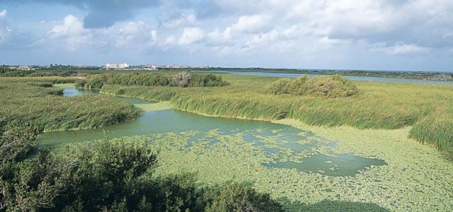 Bubali Bird Sanstuary à Aruba