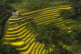 Sapa – Mu Cang Chai – Hagiang Terraced Field Trail 9Days 8Nights 4