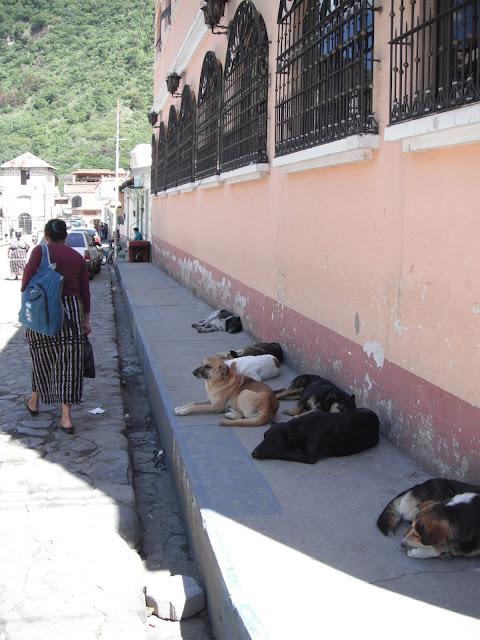 street dogs strays Panajachel