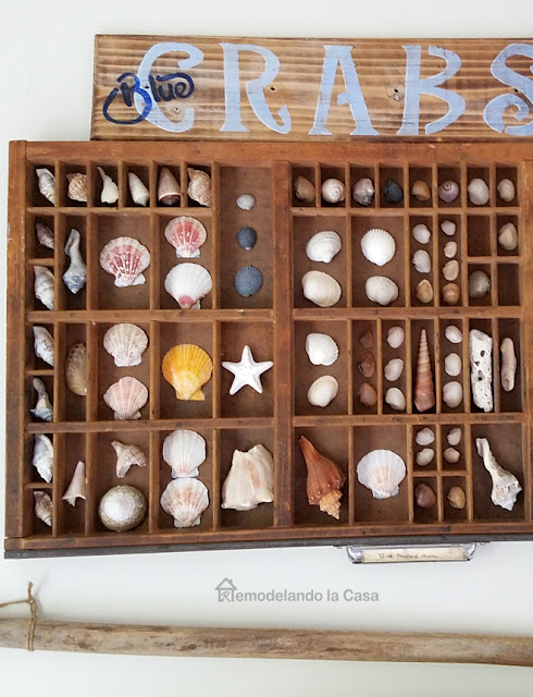 a collection of sea shells displayed in a printer's tray