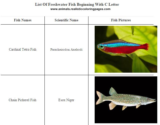 List Of Freshwater Fish Beginning With C