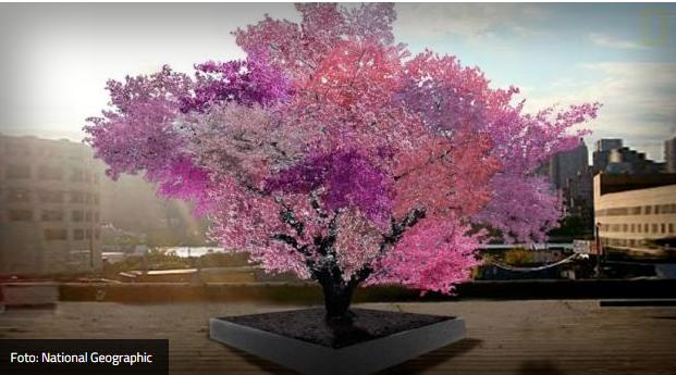 40 vrsta voća na jednom drvetu?