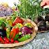 Crea tu propia tienda de comida especial para alérgicos