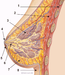 breast augmentation Milwaukee