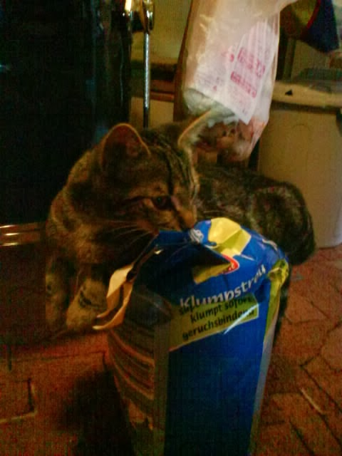 katzen frisst wenig