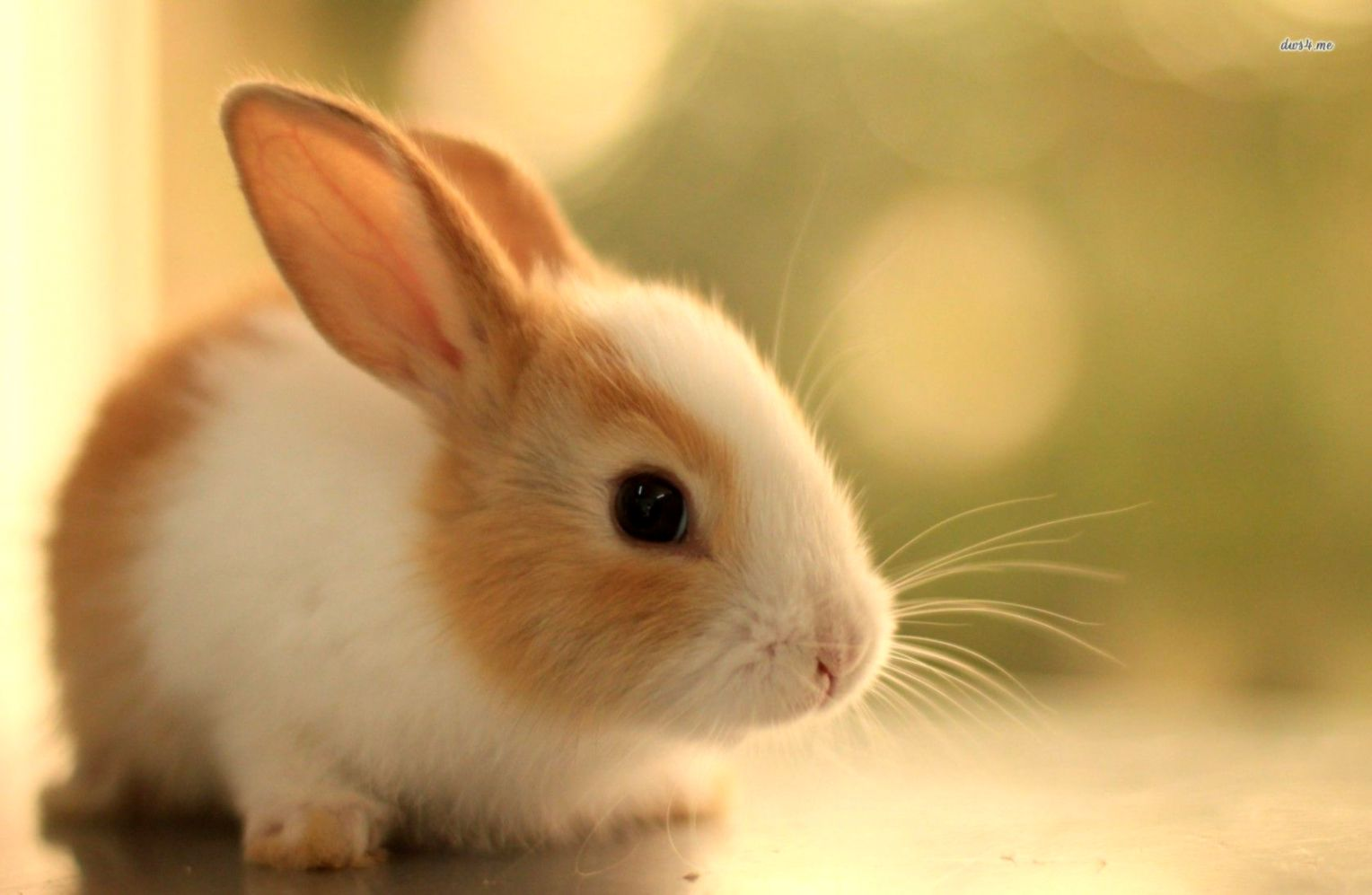 Cute Bunny Wallpaper Wallpapers Minimalist