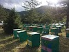 Πότε πάμε τα μελίσσια στον έλατο, ποιες περιοχές δίνουν μέλι;