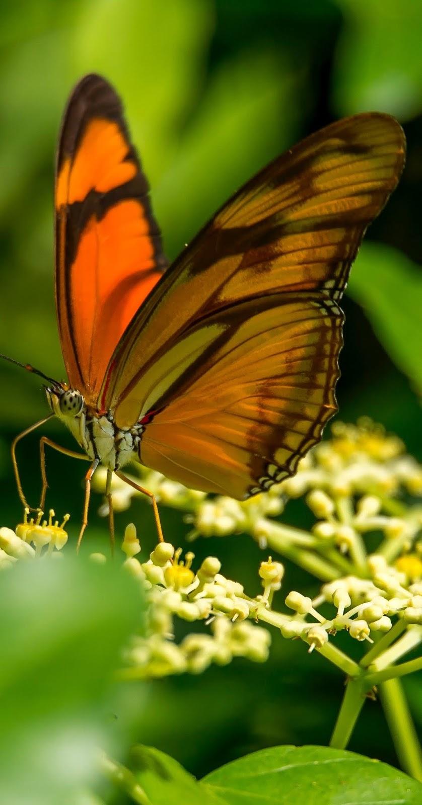 A butterfly sucking nectar.