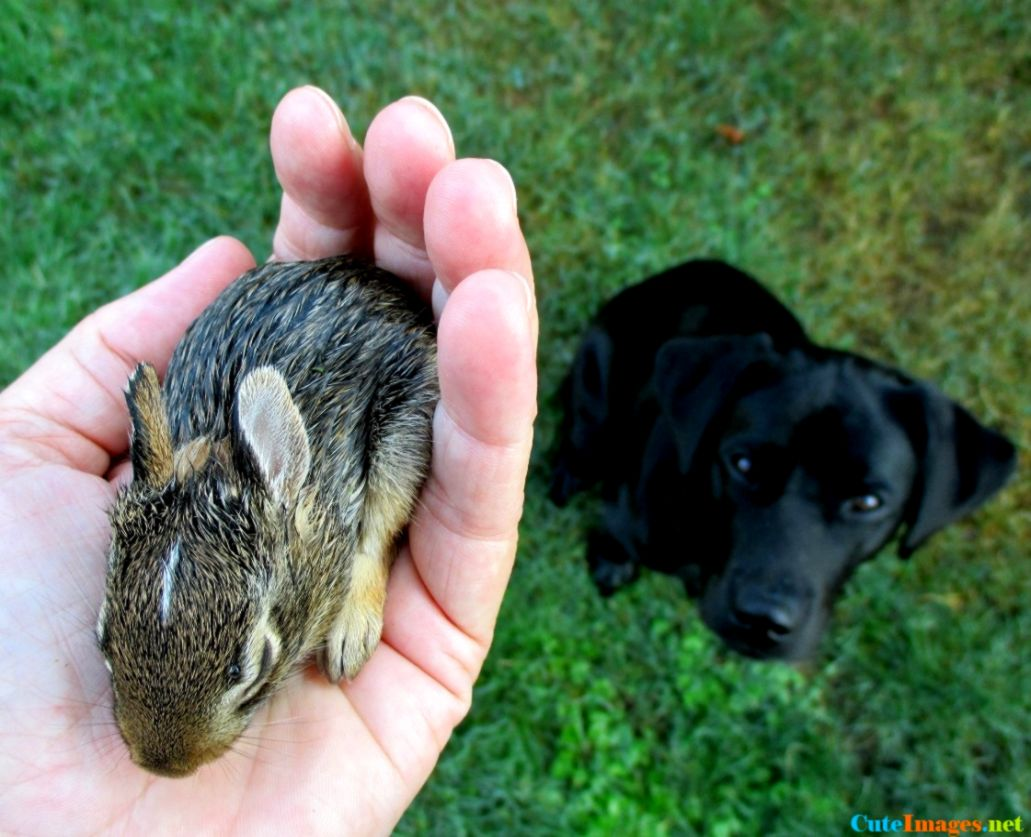 View Original Size Rabbit Cute Rabbits Names