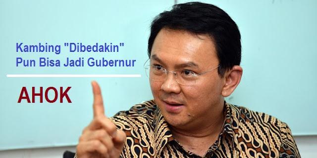 """Basuki Tjahaja Purnama alias AHOK: Kambing """"Dibedakin"""" Pun Bisa Jadi Gubernur"""