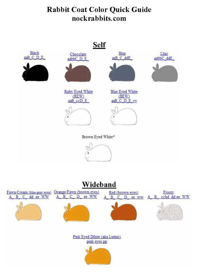 Mengenal tentang warna & gen warna Kelinci hias lengkap