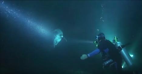 Un dauphin blessé s'approche d'un plongeur et lui demande de l'aide. Il se passe ÇA ensuite!