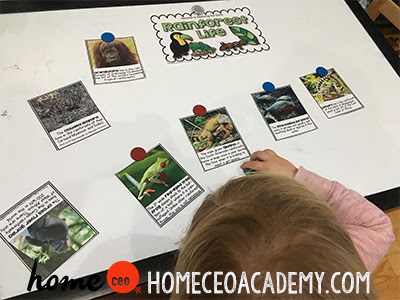 https://www.teacherspayteachers.com/Product/Rainforest-Life-Week-17-Age-4-Preschool-Homeschool-Curriculum-by-Home-CEO-2508907